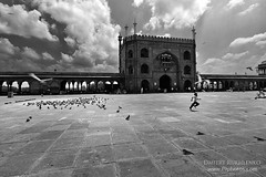 Jama Masjid Mosque (Dmitry Rukhlenko Travel Photography) Tags: boy people india building male bird birds architecture person masculine pigeon delhi muslim running run aves mosque architectural human lad humanbeing youngman humans humanbeings edifice jamamasjid edifices placeofworship avain religiousbuilding