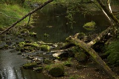Camp Creek (Nathan Ostgard) Tags: trees green water grass oregon branches logs rivers loonlake bushes campcreek
