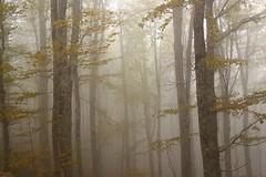 Fondo della Salsa (del drago) Tags: road wood italy mist nature strada italia ombra bosque neblina nebbia wald autunno outono abruzzo appennino buio bosco naturephotography faggio appennini gransasso parconazionale paretenord faggeta tenebra montecamicia fondodellasalsa