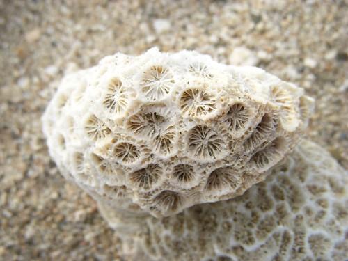 珊瑚礁03.JPG