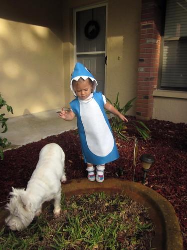 shark and brian