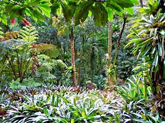 ~~LYON ARBORETUM #18~~ (TravelsThruTheUniverse) Tags: tropicalplants exoticgardens tropicalgardens tropicalfoliage subtropicalgardens tropicallandscapes mygearandme subtropicallandscapes