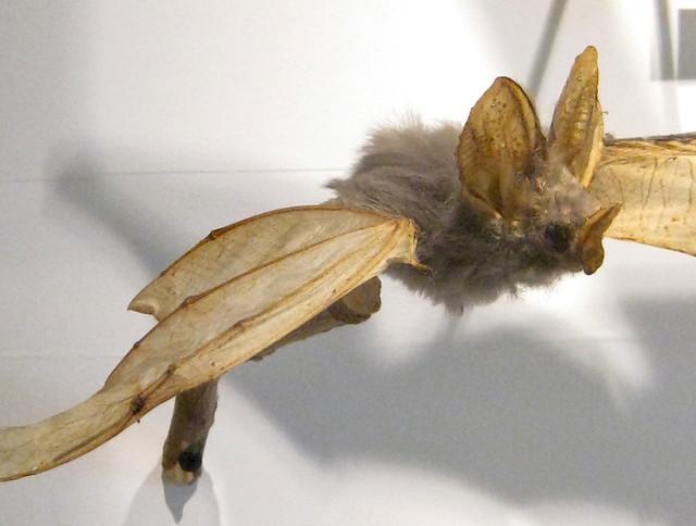 bat specimens
