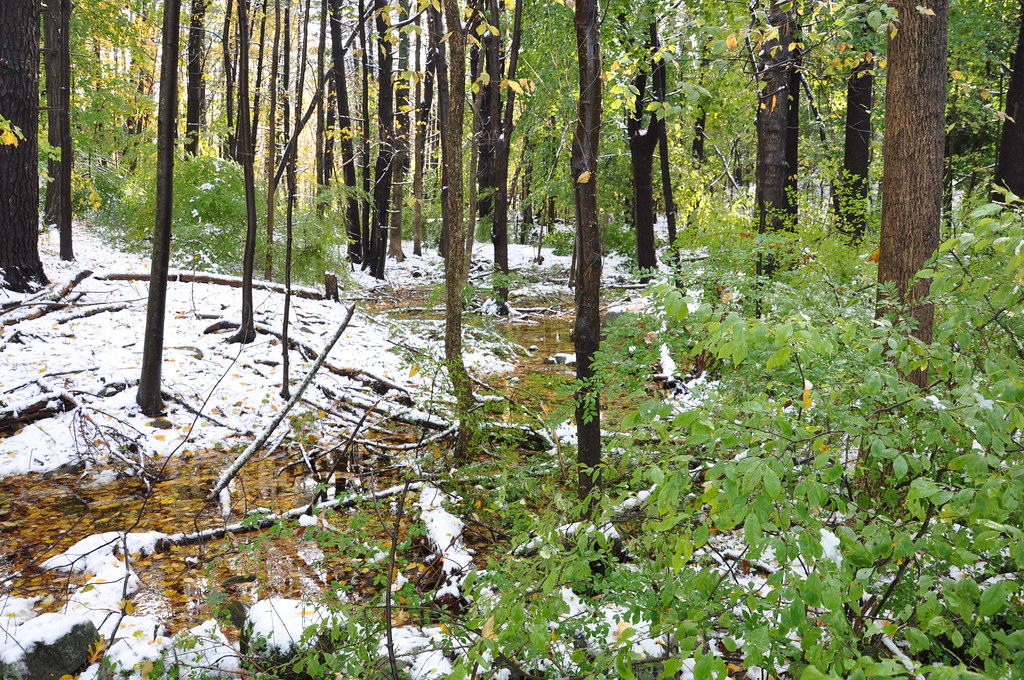 2011-10-30 - Branches Down from Last Night's Snow Storm 020