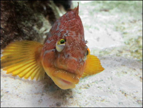Rock fish glamour shot