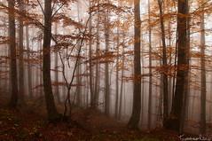 Into the Trees # 2 (Tommaso Renzi) Tags: