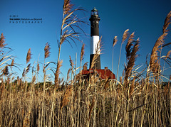 October Reeds  - Goodbye Fall at Fire Island (Babylon and Beyond Photography) Tags: autumn lighthouse fall beach horizontal reeds landscape nikon perspective babylon fireisland fins robertmoses nikond90