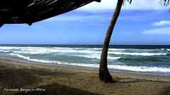 MARGARITA (ojoadicto) Tags: beach nature digitalshot