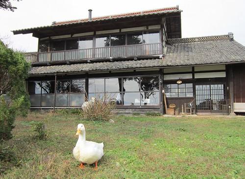 庭から見たengawa cafe とアヒル by Poran111