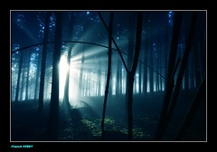 Lumire et brume dans la foret ** Light and mist in the forest ** (francky25) Tags: light mist forest la lumire et foret dans brume doubs comt franche alaise
