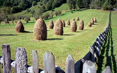 field (Jos Mecklenfeld) Tags: film landscape minolta kodak rangefinder romania himatic landschap ektar 7sii rokkor roemeni suceava minoltahimatic7sii romnia kodakektar kodakektar100 epsonv500