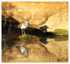 "bird (aziouezmazouz) Tags: amazing national geographic theunforgettablepictures saariysqualitypictures ""flickraward"" coppercloudsilvernsun naturesgreenpeace ""flickraward5"""