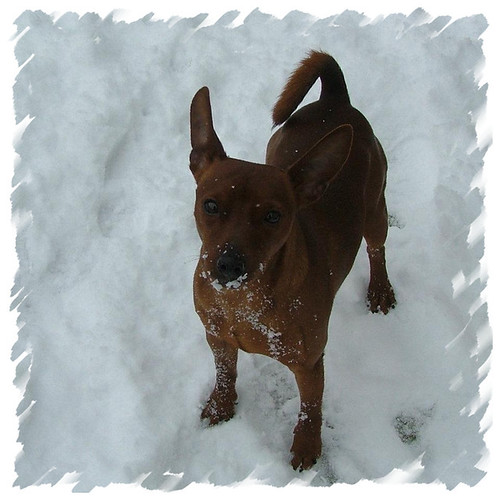 Cody sneeuw