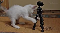 El Gato de mi Abuela.... (Francisco Grate) Tags: gato felino tripode