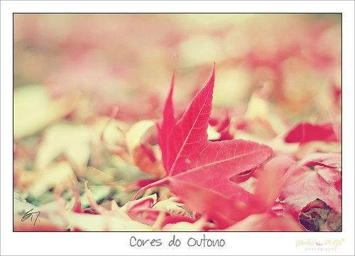 Colors of Autumn by Paulo Veiga Photo