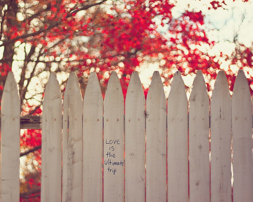 {Words of Wisdom} Fence Friday by Jaime973