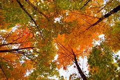 Autumn Upshot