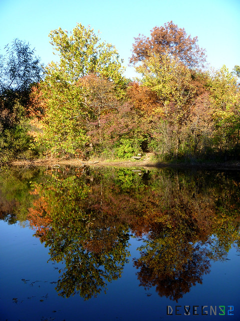 Trees Reflection