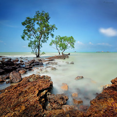 Pasir Panjang (sirman88) Tags: longexposure blue seascape motion tree port square outdoors photography interestingness nikon malaysia dickson pantai calmness portdickson pasirpanjang revisited kelong 2011 d90 traveldestinations colorimage fishermanvillage negerisembilan tokina1116 azmanrahman sirman88