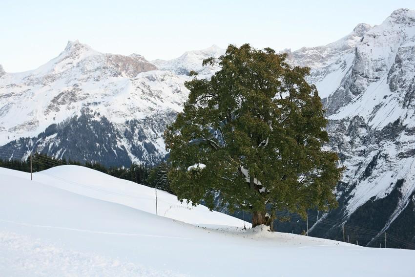 В Альпах уже зима..) 9 октября в горах ) IMG_0249