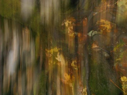Forest Blur