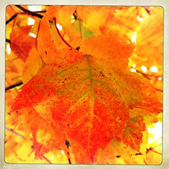 Hipsta Fall (pam's pics-) Tags: autumn fall colors leaves colorado denver fallfoliage co iphone pammorris pamspics hipsta appleiphone iphone4 hipstamatic