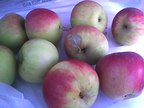 Winesap Apples