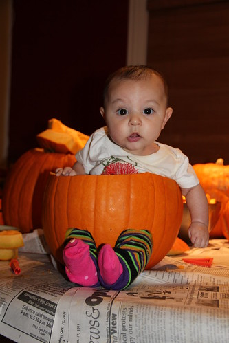 Jovie in a pumpkin!