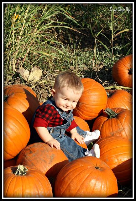 Fall Farm 2011 148B