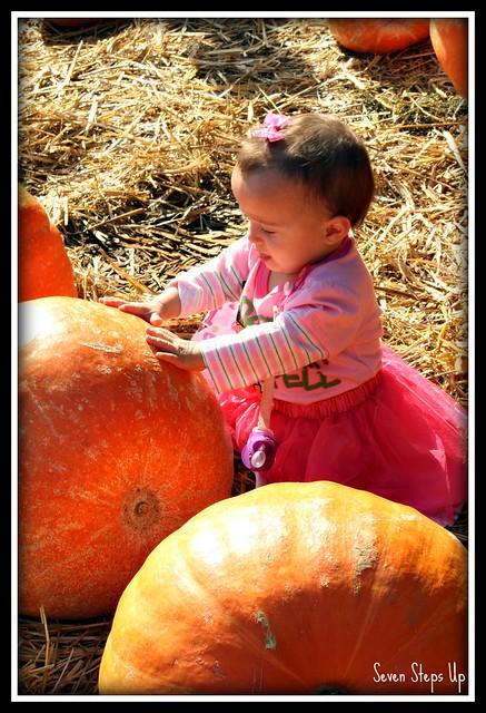 Fall Farm 2011 087B