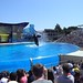 Sea World with SYR - 046