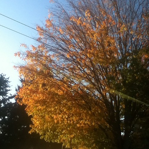 No filter - autumn in Seattle