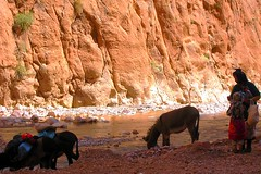 Gorges du Dadès :: (Waldir PC ♥ Ana Claudia Crispim) Tags: africa sahara desert morocco maroc saara deserto marrocos magreb donana waldirpc