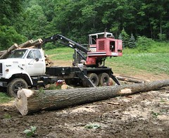 However, much of the timber was very high quality and was being cut at the right time.