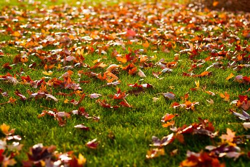 fall fb-0149