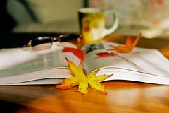 Seasonal Reading (chun @ beijing) Tags: autumn stilllife film sunshine 35mm book nikon mapleleaf fm3a ektar100 nikkorais85mmf18