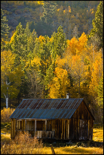 Cabin Under the Yellow Woods