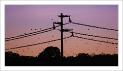 Completo - No Vacancy (beppeverge) Tags: light sunset sky italy color green birds canon geotagged photography eos photo europe italia tramonto photos  uccelli cielo pylons tralicci beppeverge
