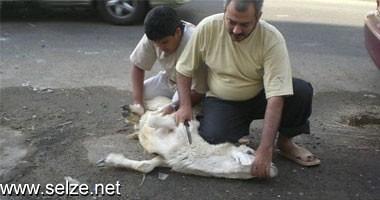 حبس 4 مسلمين لذبحهم خروف العيد