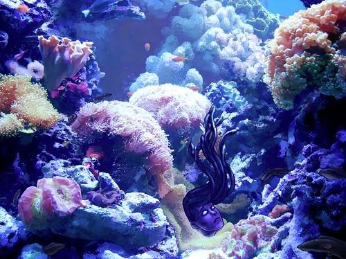 medusa stage 3