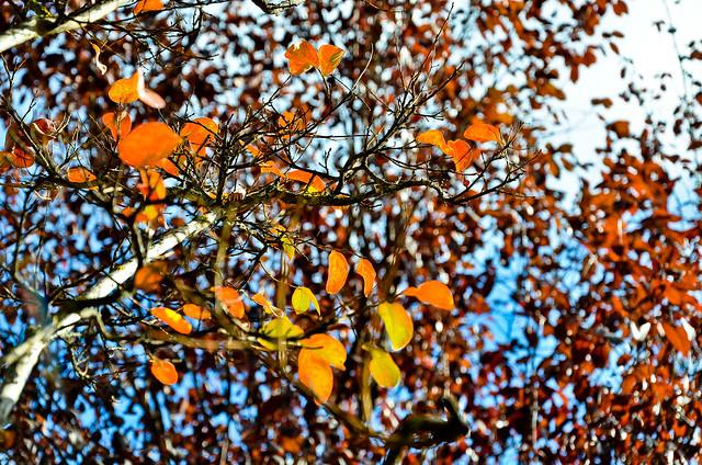 otoño 13