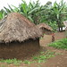 Pygmy village in Congo