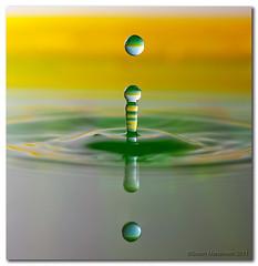 """Aussie Green and Gold - """"Aussie Aussie Aussie!"""" """"Oi! Oi! Oi!"""" (danishpm) Tags: reflection green yellow canon aussie waterdrops manfrotto tamron90mmf28dimacro eos450d stobist 450d aussieaussieaussieoioioi canonspeedlight430exii sorenmartensen"""