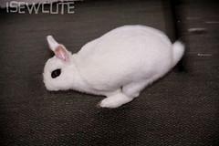go Go GO Yuki - run rabbit run by isewcute (isewcute) Tags: november ohio white cute rabbit bunny animal canon photo action adorable yuki kawaii monday thanksgivingweek today simplepleasure whiterabbit cottontail longears housebunny myjoy fancyeyes isewcute bunnyportraits