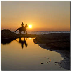 The last ride (Nespyxel) Tags: winter sunset sea horse sun beach water silhouette backlight reflections tramonto mare ride sole riflessi cavallo spiaggia controluce reflexes nespyxel stefanoscarselli micarttttworldphotographyawards micartttt ruby5 michaelchee