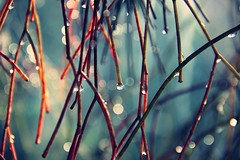 Magic (alina.) Tags: blue autumn red rain canon bokeh branches magic raindrops 52weeks canon550d canoneos550d blinkagain alinacerny