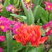 "Regents Park Flowers • <a style=""font-size:0.8em;"" href=""http://www.flickr.com/photos/26088968@N02/6223535404/"" target=""_blank"">View on Flickr</a>"