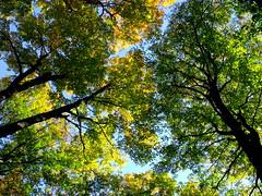 look up and be thankful 2 (dmixo6) Tags: thanksgiving autumn canada nature beauty gravenhurst dugg dmixo6