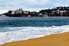 (danielle kiemel) Tags: ocean sea seascape beach nature landscape photographer tide australia nsw newsouthwales centralcoast whitewash waterscape terrigal daniellekiemel wamberalbeach