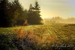 misty field (Eyesplash - Summer was a blast, for 6 million view) Tags: morning trees sun mist mountains field grass fog sunrise golden